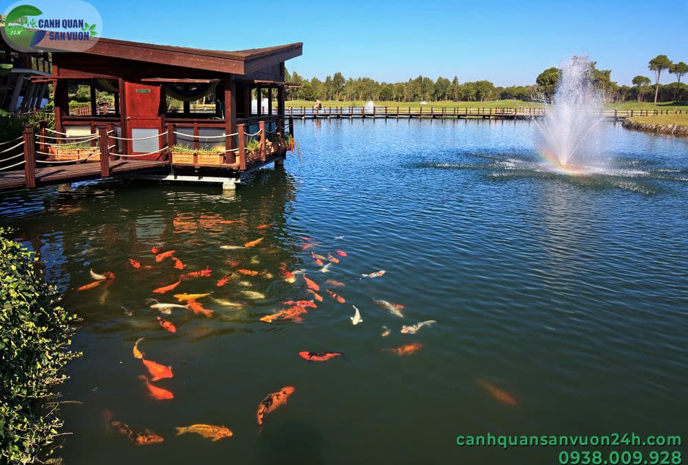 Làm hồ cá Koi